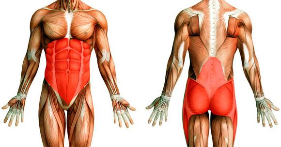 схема мышц кора