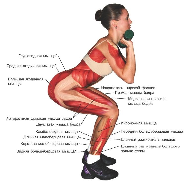 prisedaniya-anatomiya