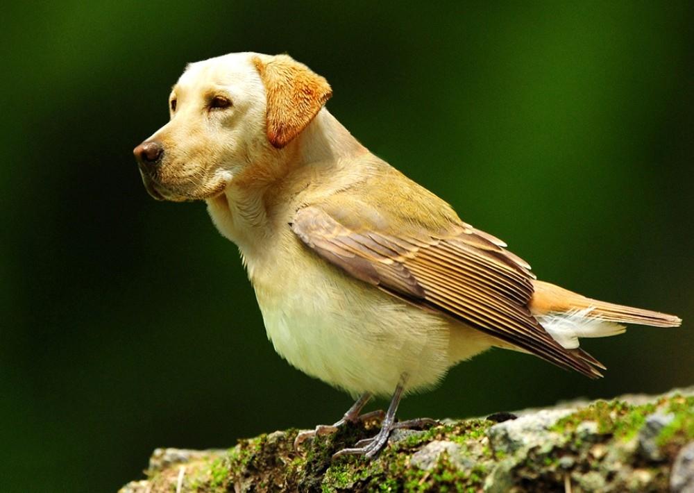 sobaka-ptica
