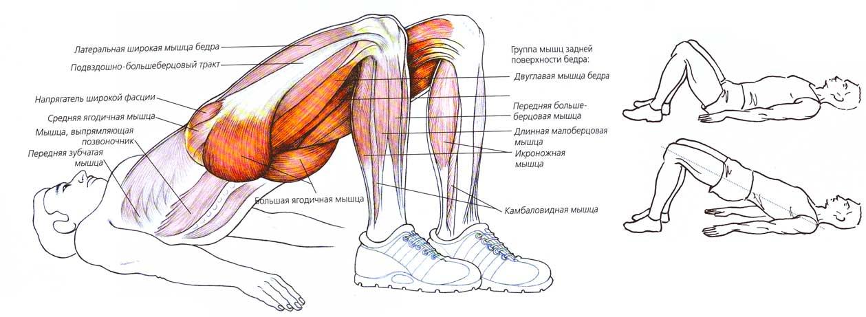Невероятно полезное и действенное упражнение для спины, ягодиц и бедер