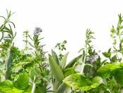 Мочегонные травы для похудения в домашних условиях
