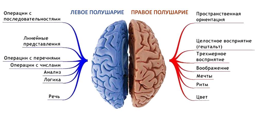 это основа, картинки для развития правого полушария мозга экономьВ выборе термобелья