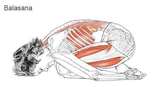 Анатомический рисунок тела в баласана