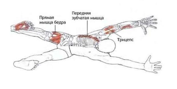 Анатомический рисунок Адхо мукха шванасана