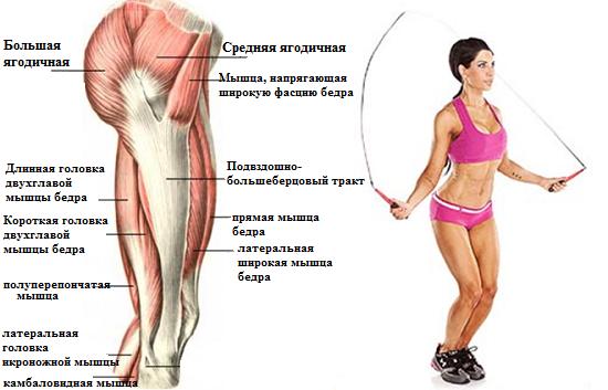 Работы мышц ног