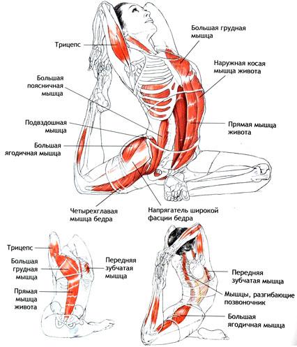 Работа мышц в капотасане