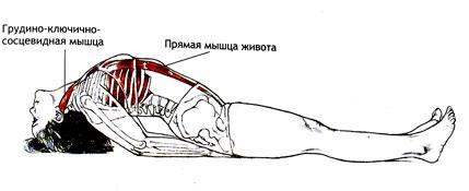 Работа мышц в Матсиасане