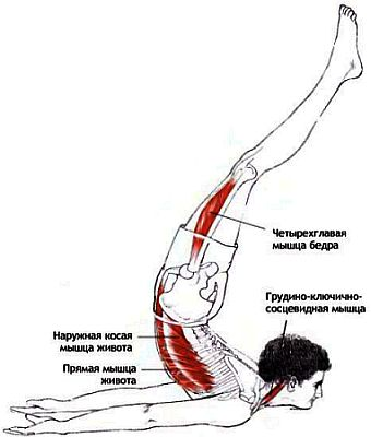 Работа мышц в Шалабхасане пурна