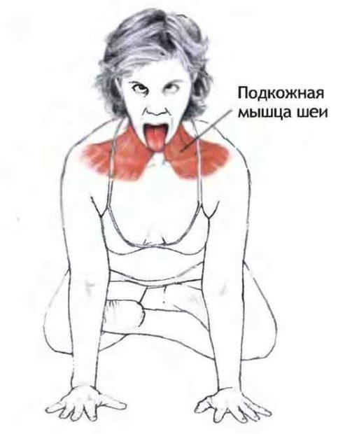 Симхасана - поза - работа мышц