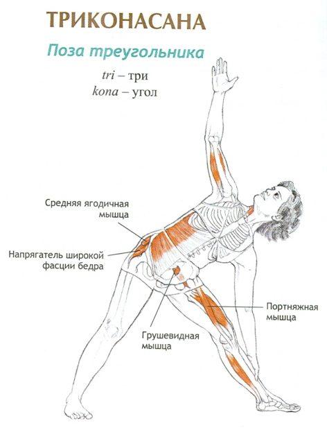 Работа мышц в позе треугольника
