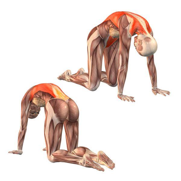 Работа мышц в марджиасане