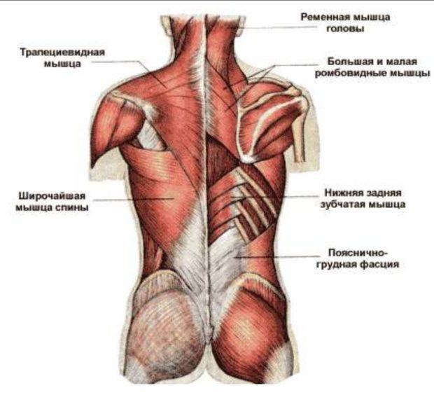 Йога воздействует на все мышцы спины
