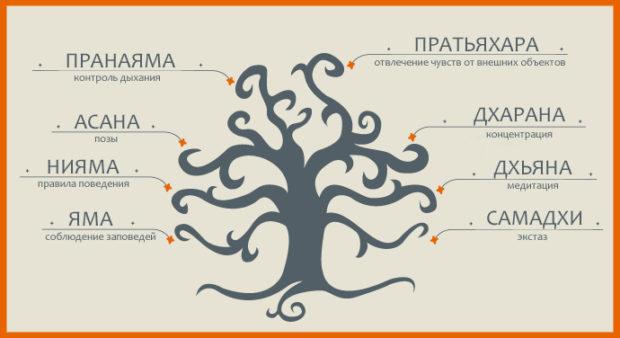 Дерево йоги Айенгара состоит из 8 направлений
