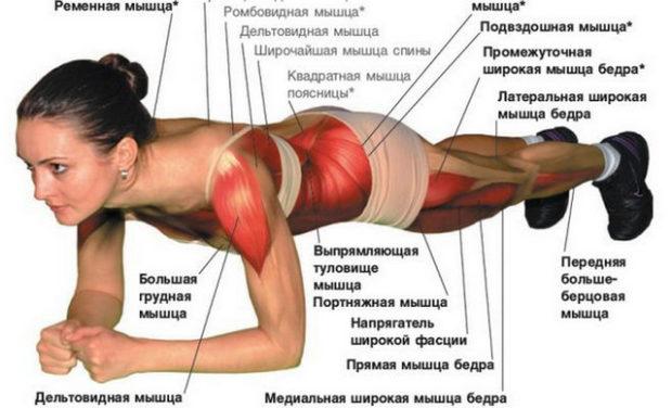 Работа мышц в классической планке