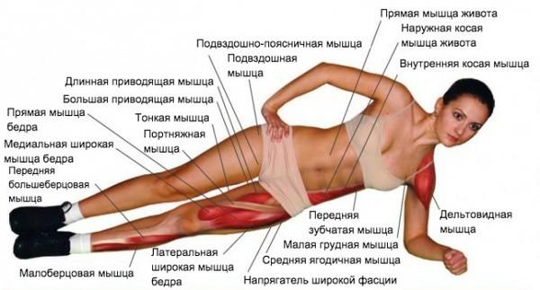 Работа мышц в боковой планке - перечень