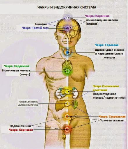 Связь чакр и внутренних органов
