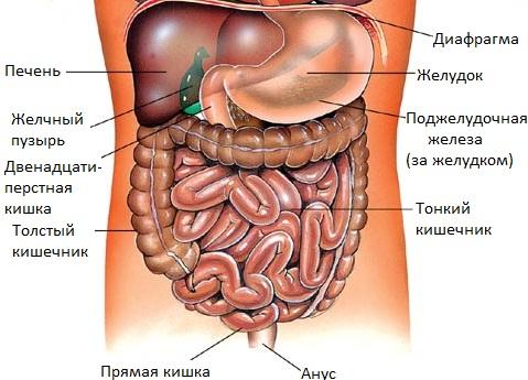 Оздоровление внутренних органов агнисара
