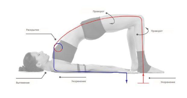 Сету Бандхасана - правильное положение тела