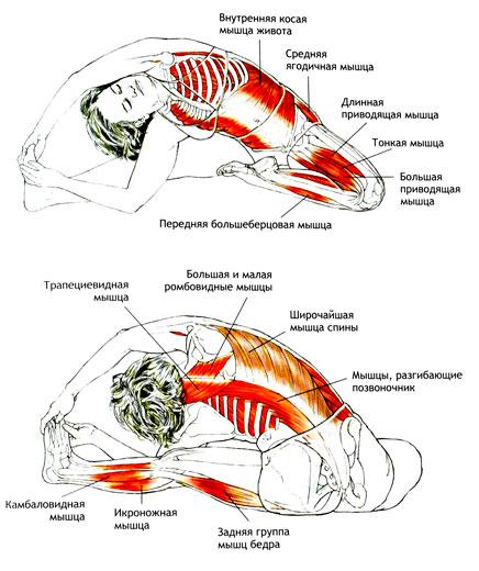 Париврита Джану Ширшасана - мышцы