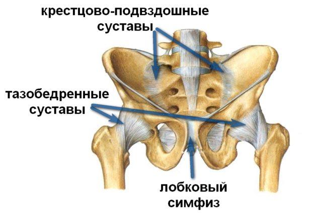 Строение костей таза
