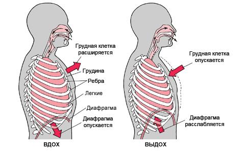 Диафрагмальное дыхание в йоге