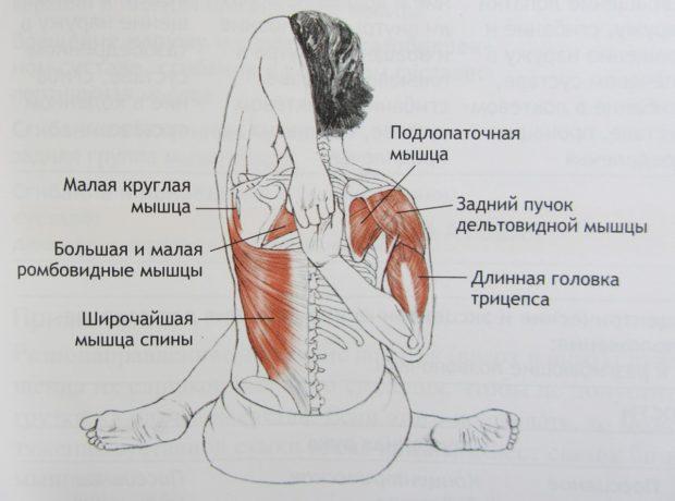 Задействование мышц
