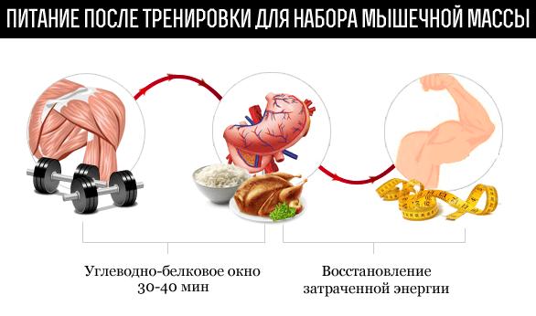 Питание для набора массы мышц