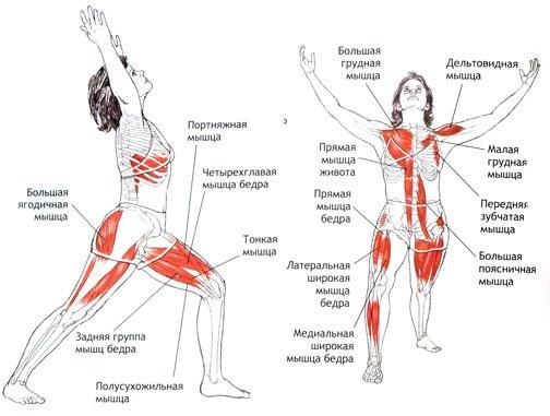Работа мышц, Воин 1