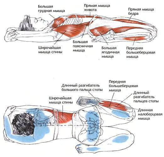 Работа мышц в позе