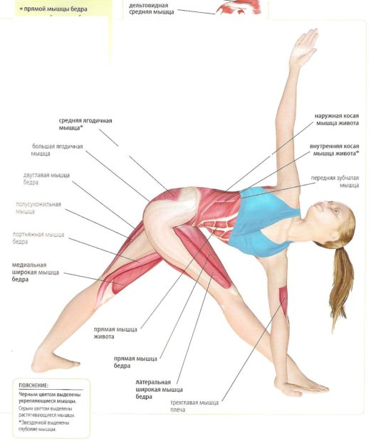 Работа мышц в асане