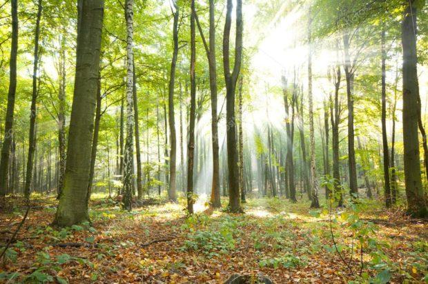 Утренний лес - медитация