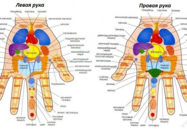 Проекция органов на руки