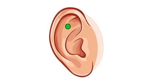 Точка здоровья на ушной раковине